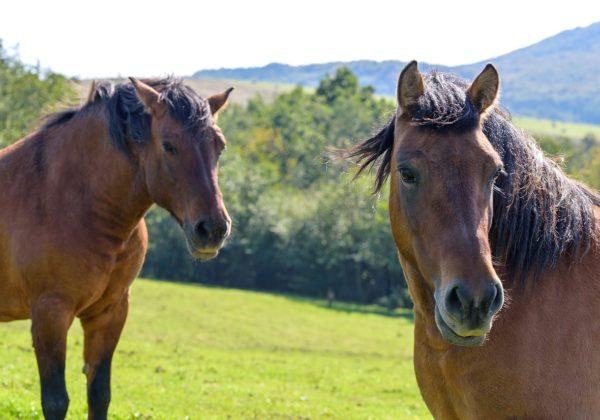 L'ARP 12 e la donna che sussurrava ai cavalli